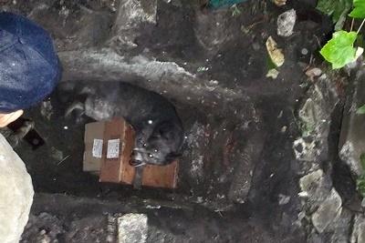 НаДнепропетровщине cотрудники экстренных служб вытянули собаку из1,5-метровой ямы